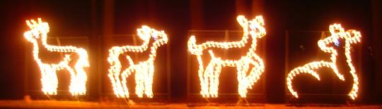 Reindeer at Look Park